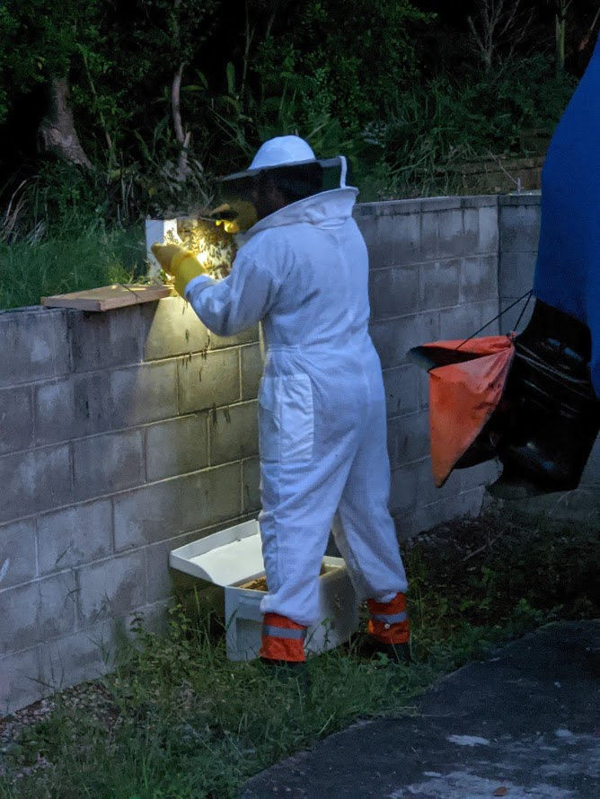 Image of a beekeeper in a protective suit and veil scraping a swarm off bees from a brick wall