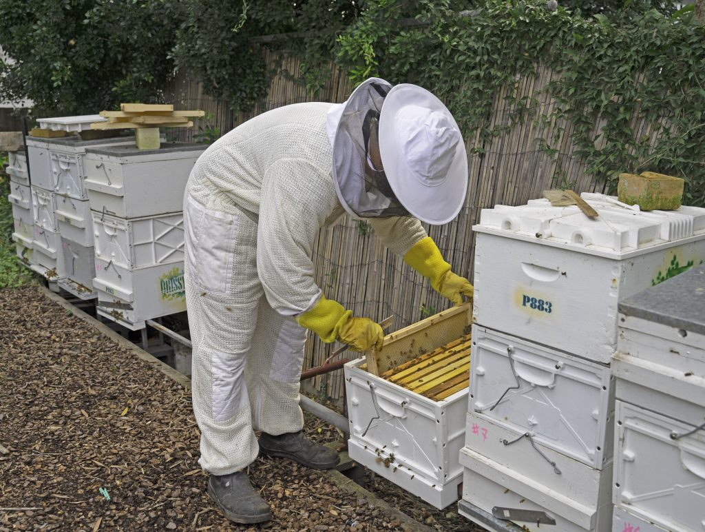 Image of a beekeepr wearing protective gear attending to a geehive